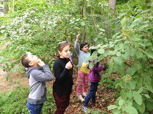 Die Kinder finden die Schmetterlinge